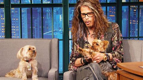 Steven Tyler's Dogs Unexpectedly Crash His Interview And