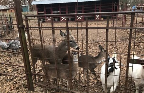 Hochatown Petting Zoo In Oklahoma Is Perfect For A Summer