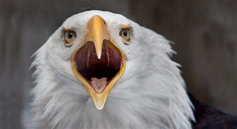 Basic Facts About Bald Eagles | Defenders of Wildlife