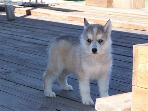 Most Beautiful Puppies To Have As A Pet