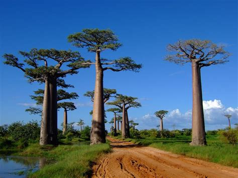 The Island of Madagascar is a Truly Unique Place - Demand