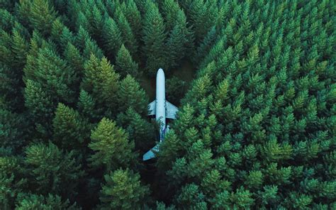 Wallpaper Forest, Plane, Aircraft, Surrounded, Aerial view