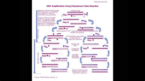 PCR song for - A2 Snab Biology - YouTube